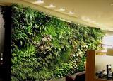 办公植物墙