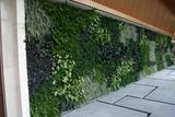 大面积植物墙
