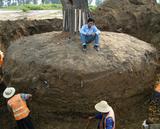 北京古树移植2